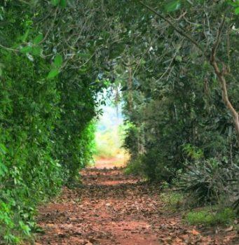 Apstiprināšanas nosliece – vadātājs informācijas mežā